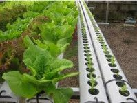 Discount Hydroponic of Hastings - Friday-Ad