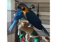 Parrots - Friday-Ad