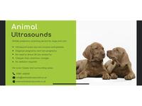 Animal Ultrasounds - Friday-Ad