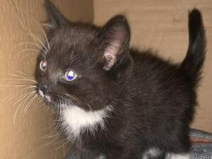 Cats Kittens For Sale In Leicester Friday Ad